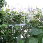 緑の庁舎・緑の建築が都市を救う