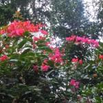 2011年(平成23年)元旦に咲いた花達・野石積みの家