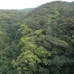 山原の新緑を訪ねる2011・3