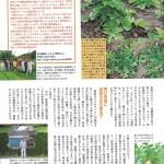 沖縄の伝統野菜・カガンジデークニ