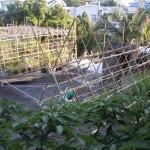屋上竹棚緑化 2012・7