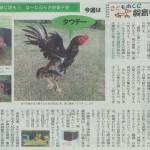 闘鶏(タウチー)
