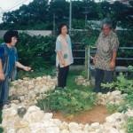 グスク式屋上菜園