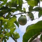 屋上庭園竹のパーゴラ