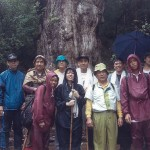 縄文杉に会いに・世界自然遺産