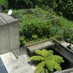 屋上緑化・菜園