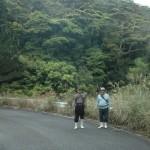 山原(やんばる)路の新緑