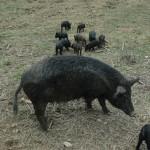 島豚の豚汁…喫茶グリーンパーム「医食同源」の考え豚肉料理にも反英