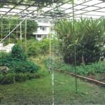 野石積みの家屋上菜園