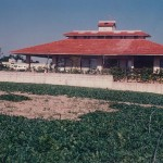 伊良波の家
