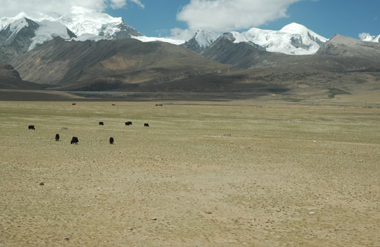 tibetutotetudou--3